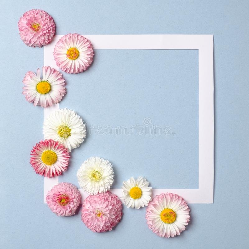 Creative layout made of daisy spring flowers and paper border frame on pastel blue background. Minimal holiday concept. Flat lay. Pattern. Top view, overhead stock photography