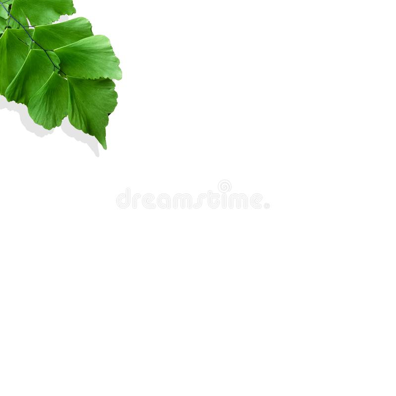 Creative layout made of fern leaves with paper card note. Flat lay. Nature concept. Creative layout made of flowers and leaves with paper card note. Flat lay vector illustration