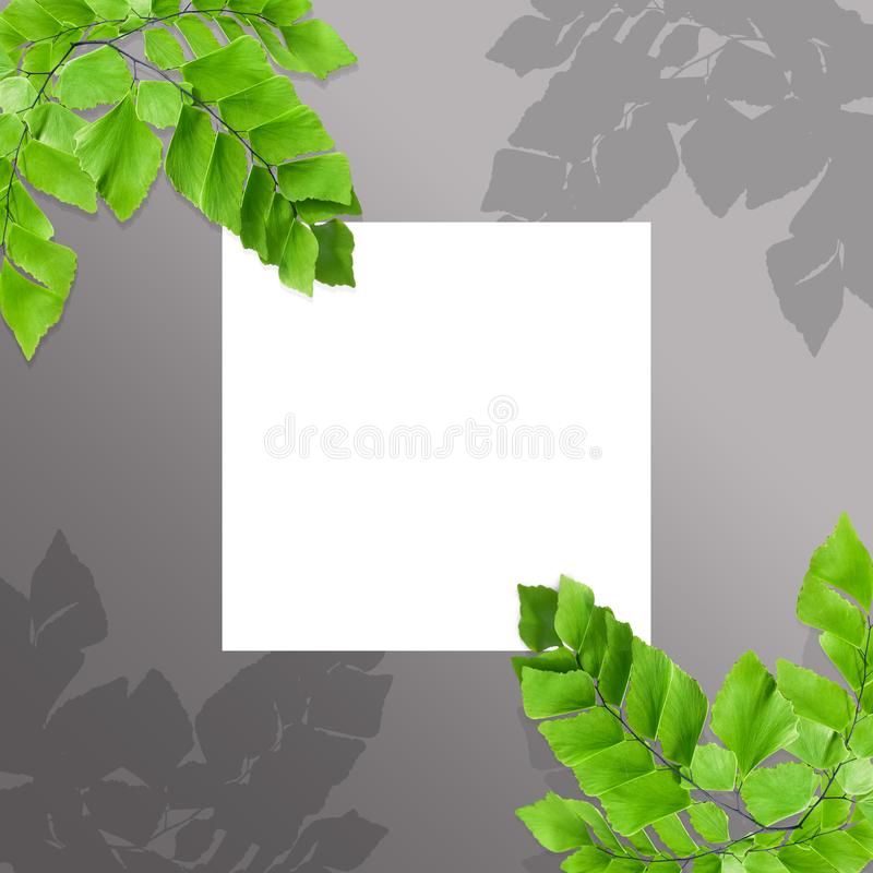 Creative layout made of fern leaves with paper card note. Flat lay. Nature concept. Creative layout made of flowers and leaves with paper card note. Flat lay royalty free illustration