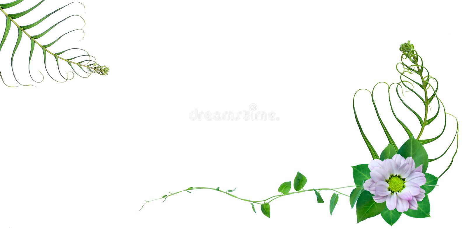 Creative layout made of fern leaves with paper card note. Flat lay. Nature concept. Creative layout made of flowers and leaves with paper card note. Flat lay stock illustration