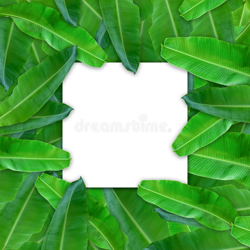 Creative layout made of flowers and banana leaves with paper card note. Flat lay. Nature concept. Creative layout made of flowers and leaves with paper card note vector illustration