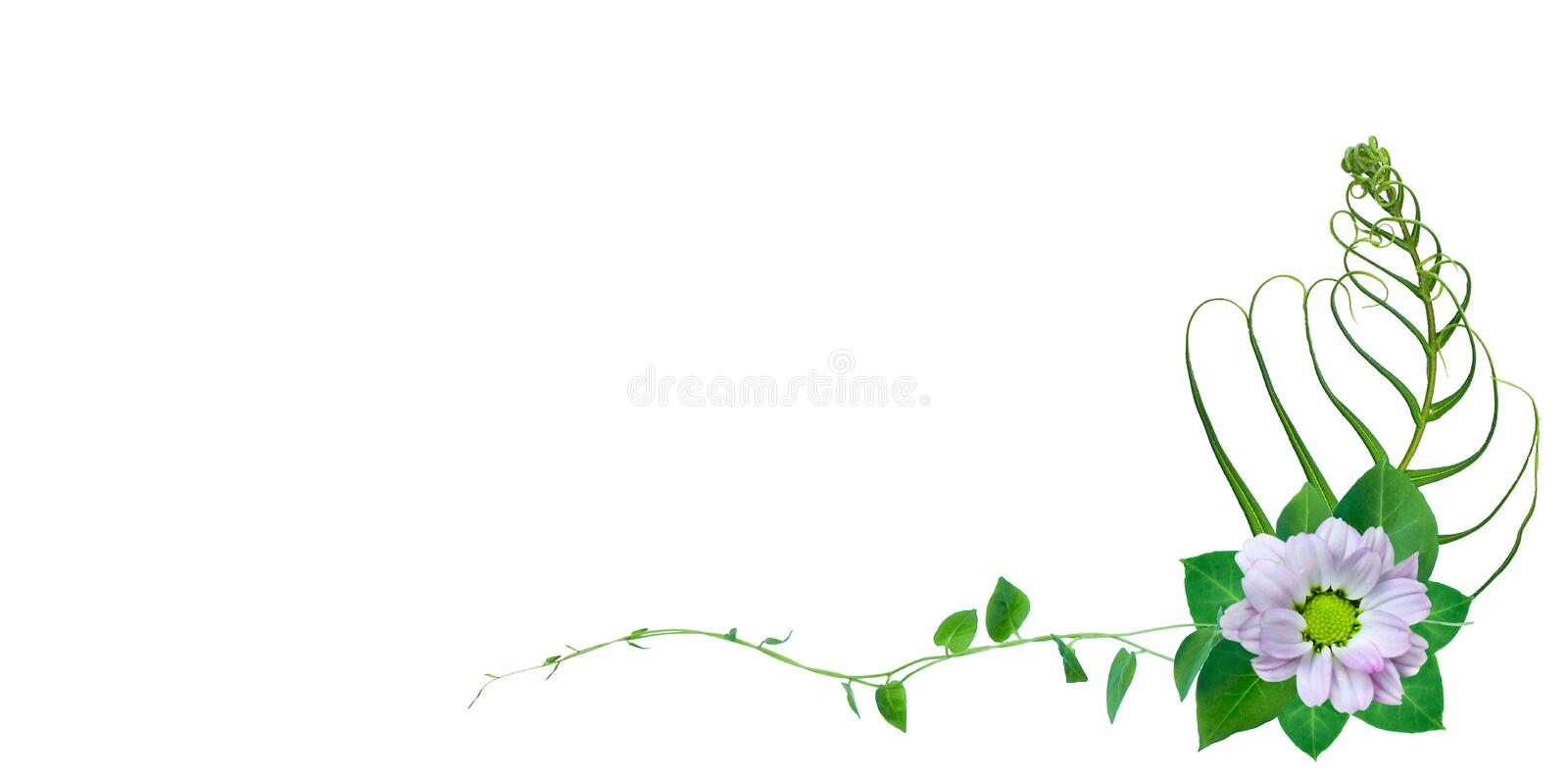 Creative layout made of flowers and fern leaves with paper card note. Flat lay. Nature concept. Creative layout made of flowers and leaves with paper card note vector illustration