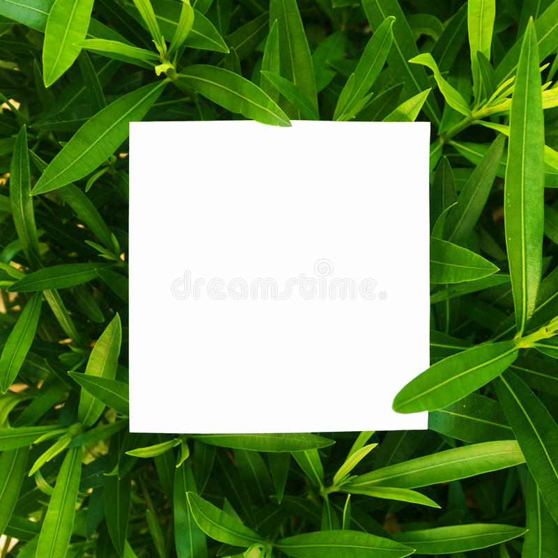 Creative layout made of flowers and leaves with paper card note. Flat lay. Nature concept royalty free stock photography