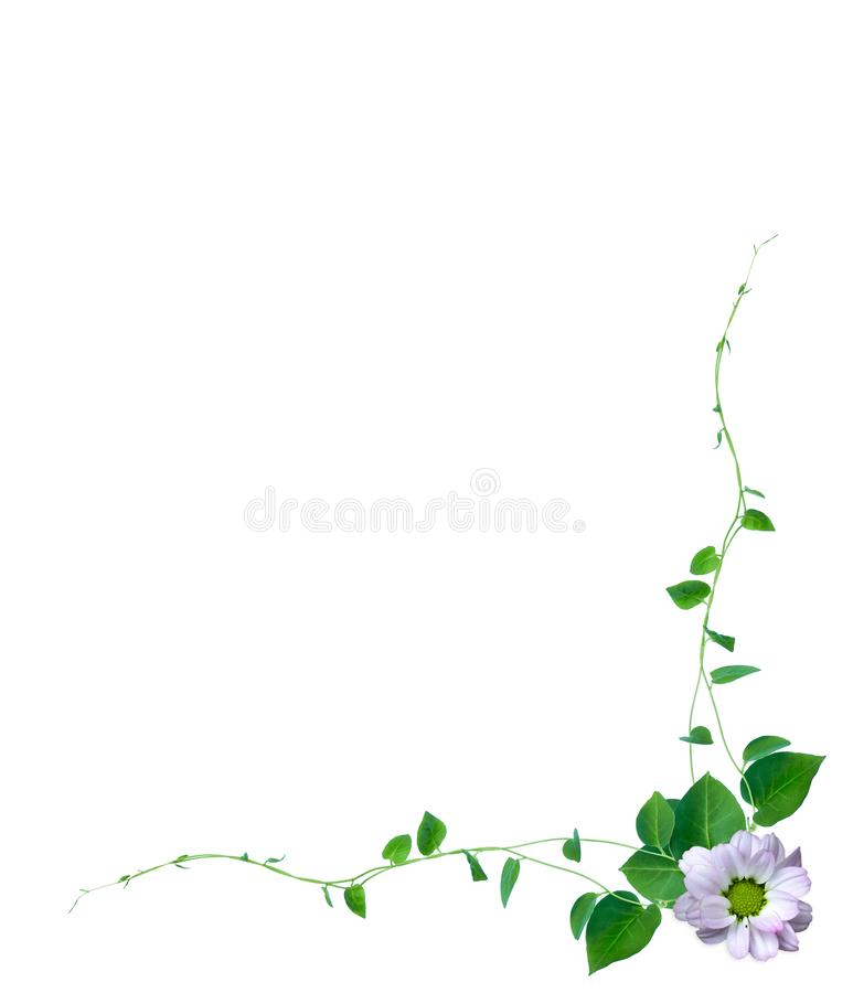Creative layout made of flowers and tropical leaf with paper card note. Flat lay. Nature concept, isolated on white background. Creative layout made of flowers vector illustration