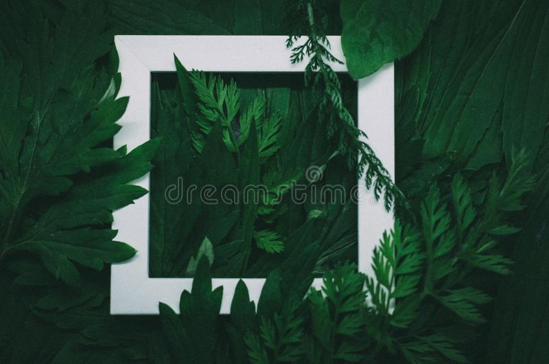 Creative layout made of forest field grass with white wooden frame. Modern ecological natural concept royalty free stock photography