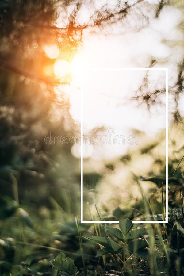 Creative layout made of green leaves with a drawn white frame and rays of sunset . Summer minimal concept. Copy space for text royalty free stock photography