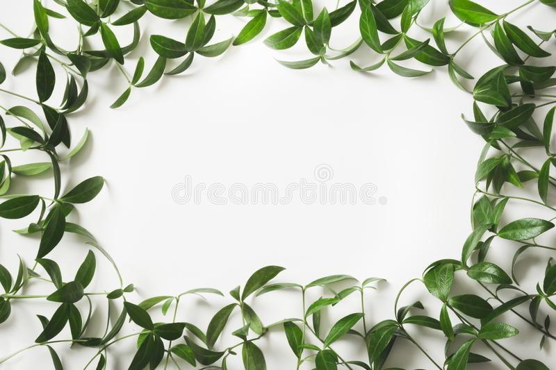 Creative layout made of green leaves with empty blank for note on white background. Top view. Nature concept stock photos