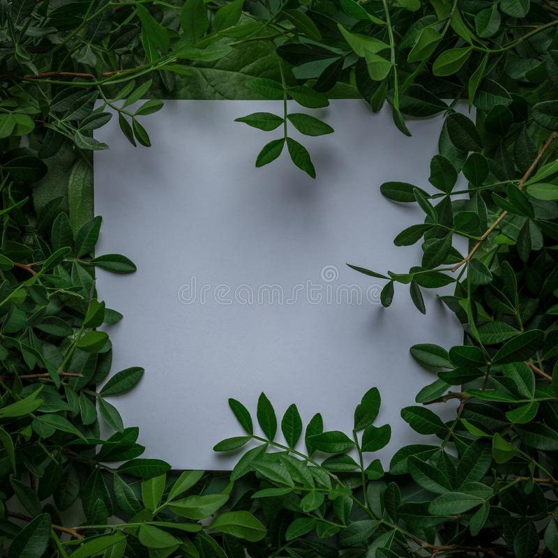 Creative layout made of green leaves with paper card note. Flat lay. Nature concept.  royalty free stock images