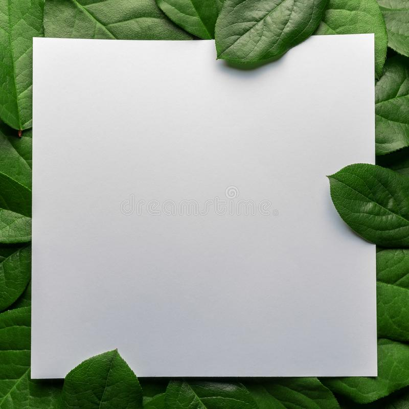 Creative layout made of green leaves with paper card note. Flat lay. Nature concept.  stock photography