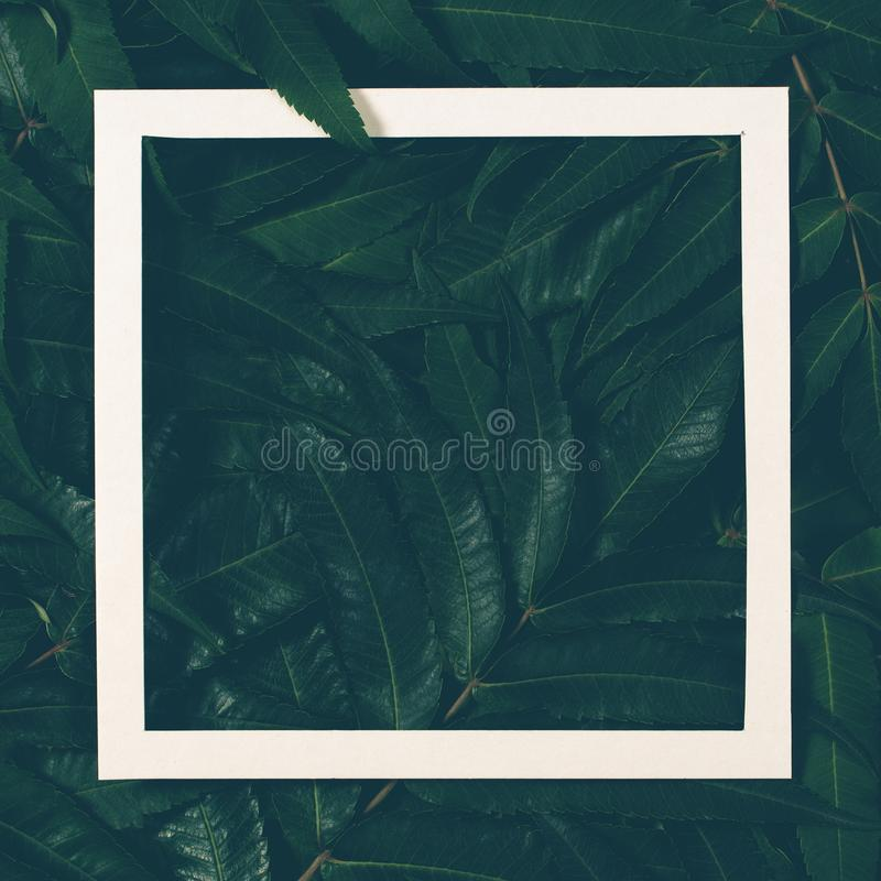 Creative layout made of green leaves with white frame. Top view, flat lay. stock images