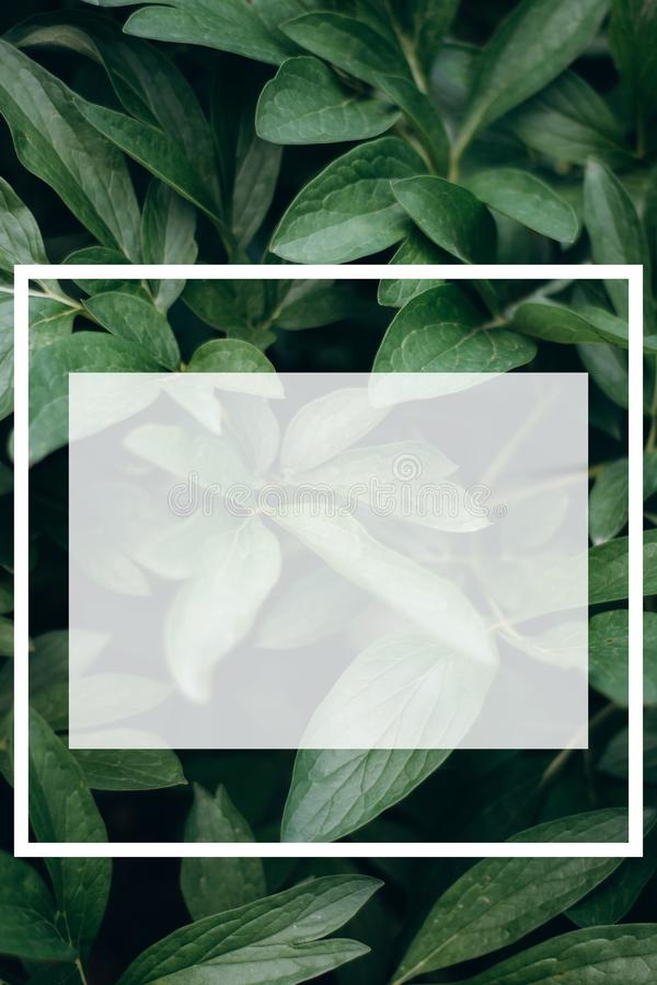 Creative layout made of leaves a with a white drawn frame. royalty free stock images