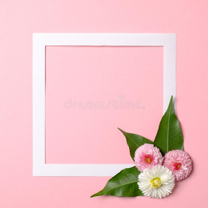 Creative layout made of paper frame border and tender spring flowers on pastel pink background. Minimal nature composition with royalty free stock image
