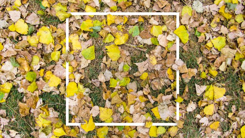 Creative layout made with yellow leaves background, square frame. This is a blank for advertising card. Nature concept. Autumn poster royalty free stock photography