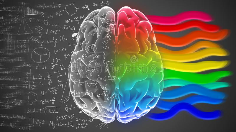 Creative and logical halves of human mind. stock image