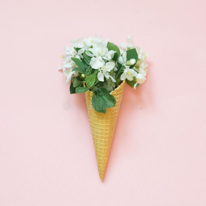 Creative still life of white spring flower in waffle cone on pink background. Spring concept. Top view. royalty free stock photo