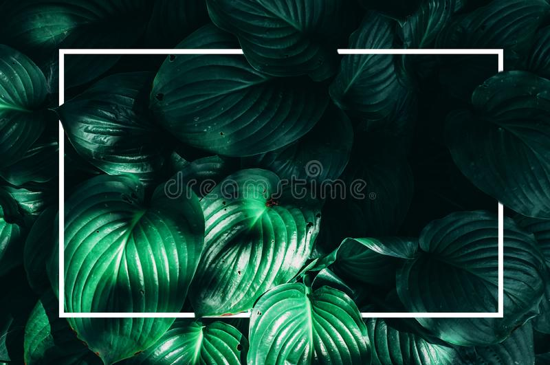Creative mock up top view of the leaves of an exotic plant and framing a white frame. Sunlight falls on green leaves. Spring, stock photo