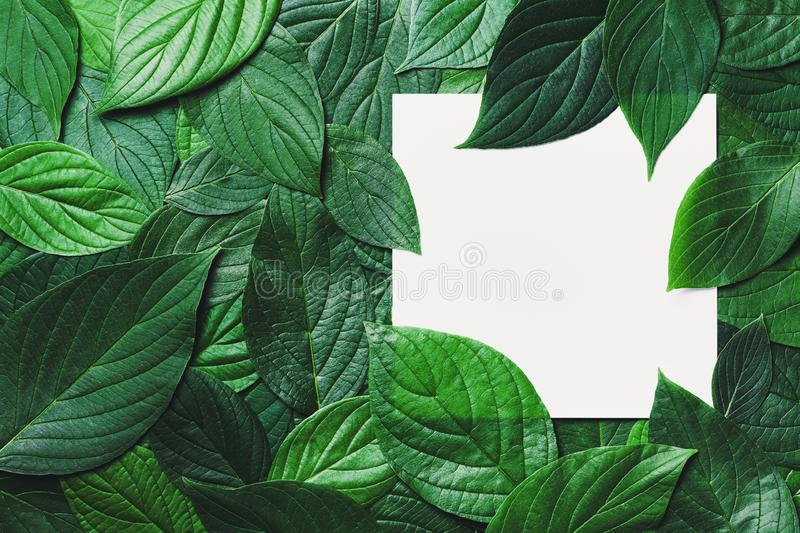 Creative mockup with clean paper card and beautiful green leaves with detailed texture. Nature greenery background royalty free stock images