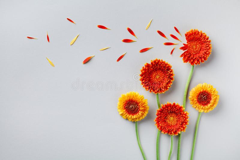 Creative nature composition of beautiful yellow and orange gerbera flowers with petals. Autumn windy concept. Flat lay style. stock photos