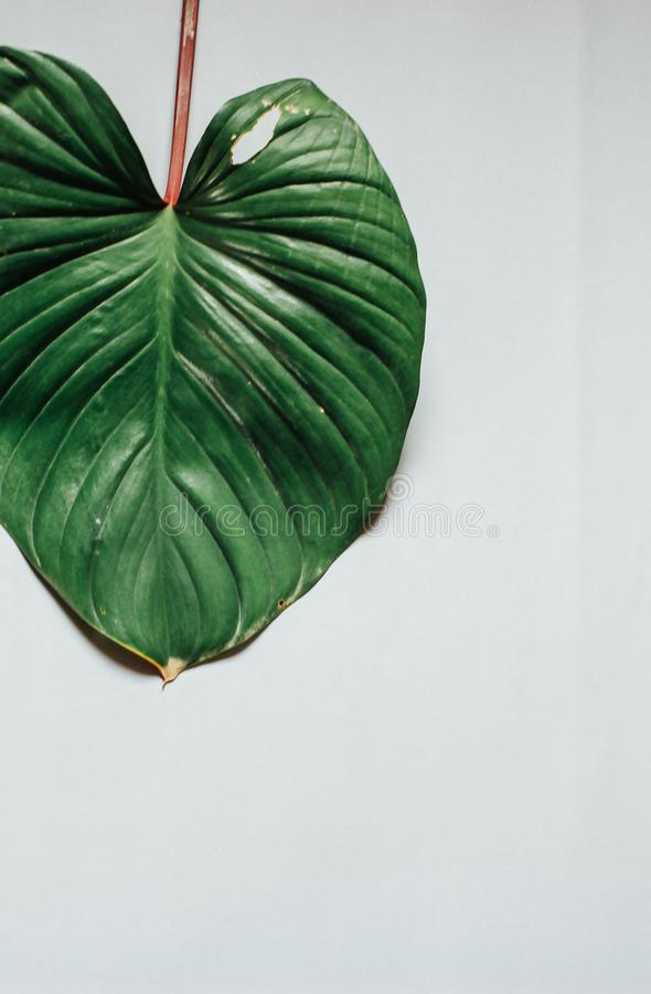 Creative nature layout made of tropical leaves and flowers. Flat lay. Summer concept stock image