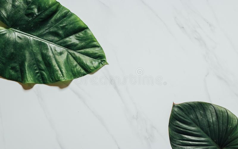 Creative nature layout made of tropical leaves and flowers. Flat lay. Summer concept royalty free stock images