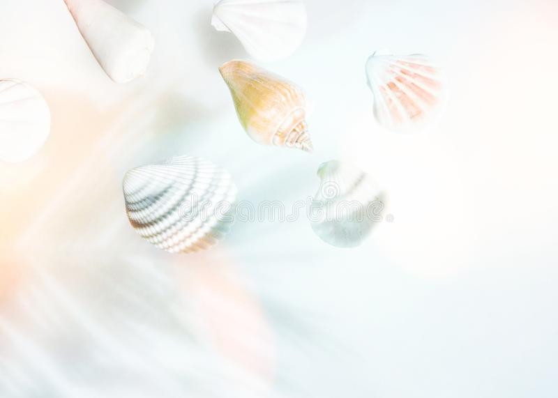 Creative nautical summer concept. Beautiful sea shells of different shapes colors on pastel gradient blue turquoise peachy pink stock photo