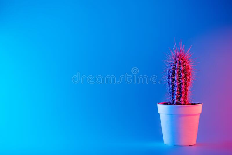 Creative neon background with cactus. Multicolor abstract backdrop with vibrant gradients. Exotic plants with pink, red stock images