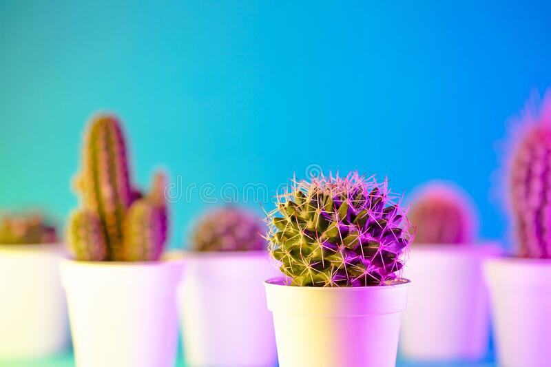 Creative neon background with cactus. Multicolor abstract backdrop with vibrant gradients. Exotic plants with yellow stock images
