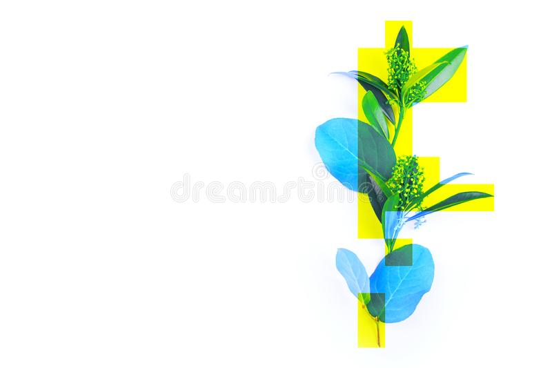 Creative photo of a plant, green leaves dyed blue with yellow rectangles, abstraction, not a standard image. Place for text royalty free stock photos
