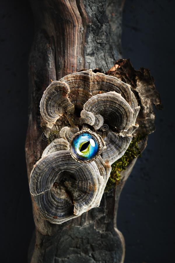 Creative ring with dragon eye on nature background royalty free stock photo