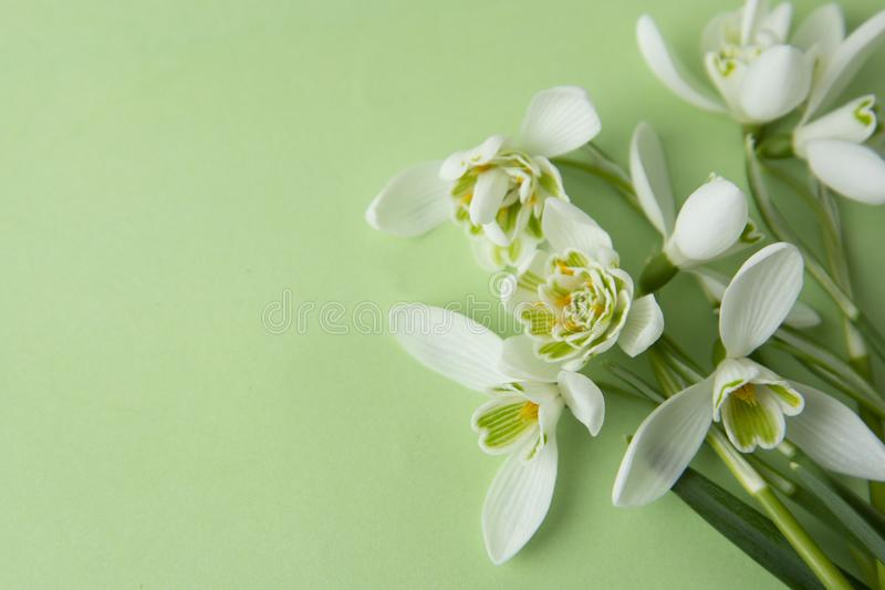 Creative spring flowers, white snowdrops over green background. Abstract background for greeting cards. Isolated stock photos