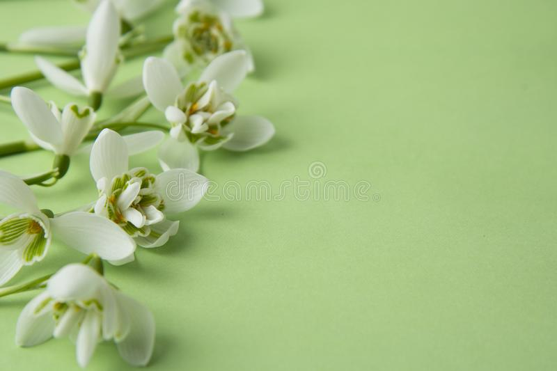 Creative spring flowers, white snowdrops over green background. Abstract background for greeting cards. Isolated royalty free stock image