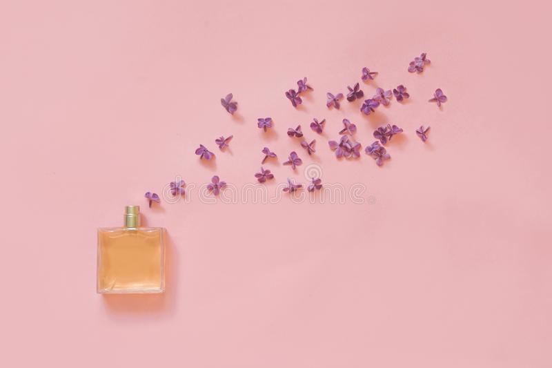 Creative still life. Perfume and blooming flowers of purple lilac on pale pink. Concept spread of fragrance. Top view. royalty free stock photo