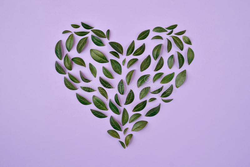 Creative Summer composition. Green leaves arranged in heart shape over violet background. Love concept. Flat lay, top view stock photos