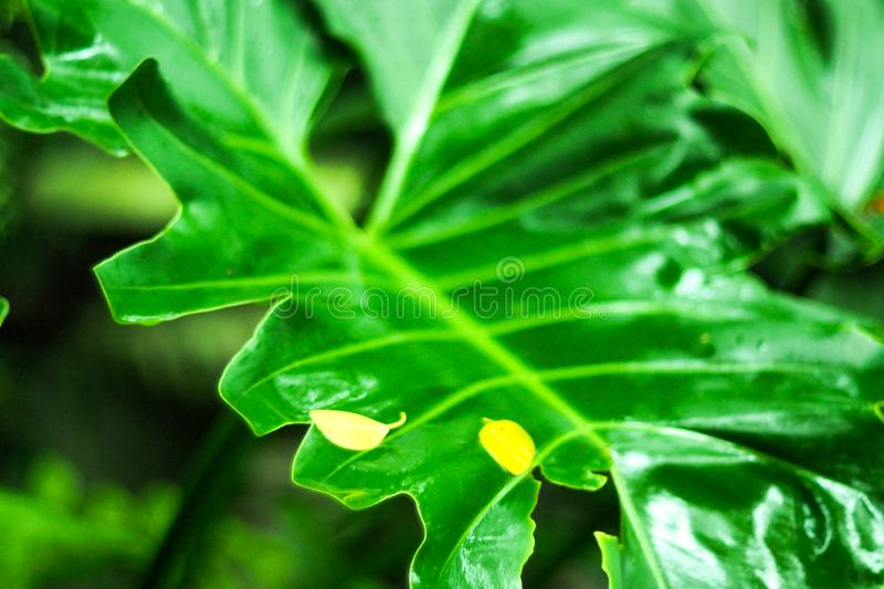 Creative tropical green leaves layout. Nature spring concept after raining fresh environment idea background royalty free stock photography