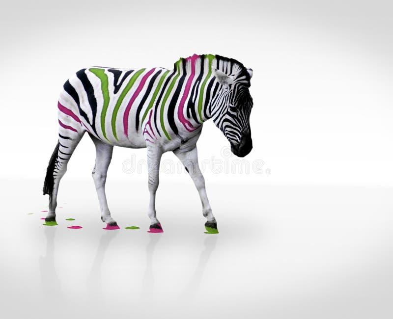Creative zebra. Creative photo of multicolored striped zebra
