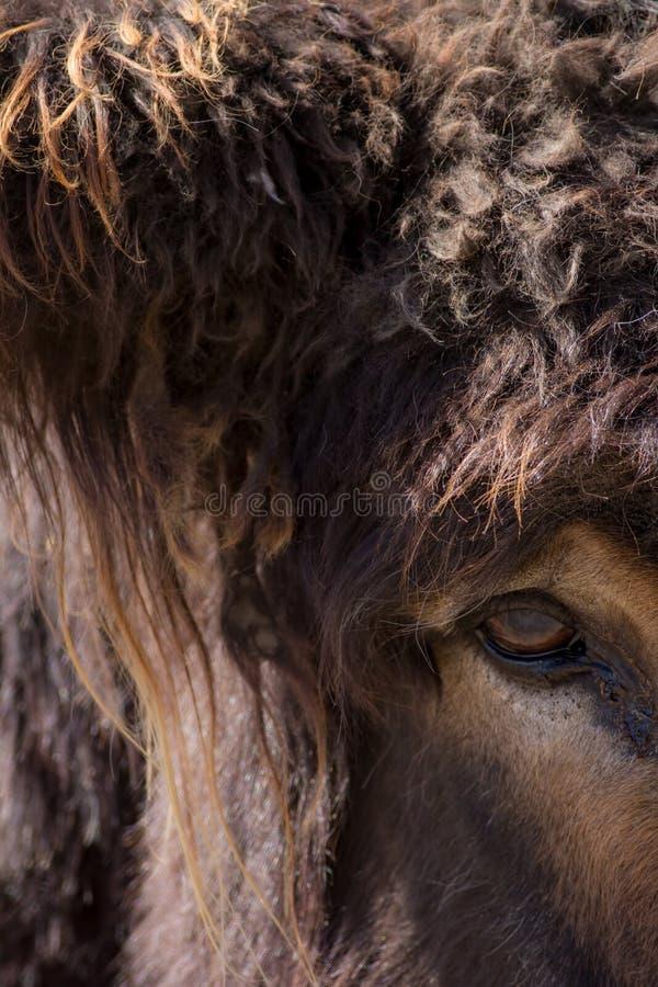 Creatura mitologica della bestia: minotauro, troll, o Mo peloso gigante fotografia stock