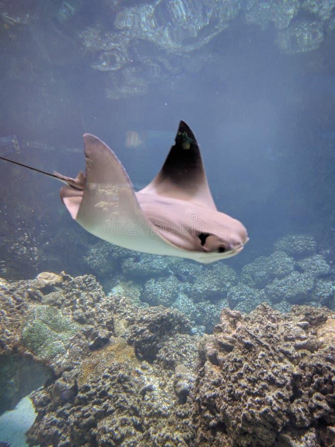Creature degli oceani immagine stock libera da diritti