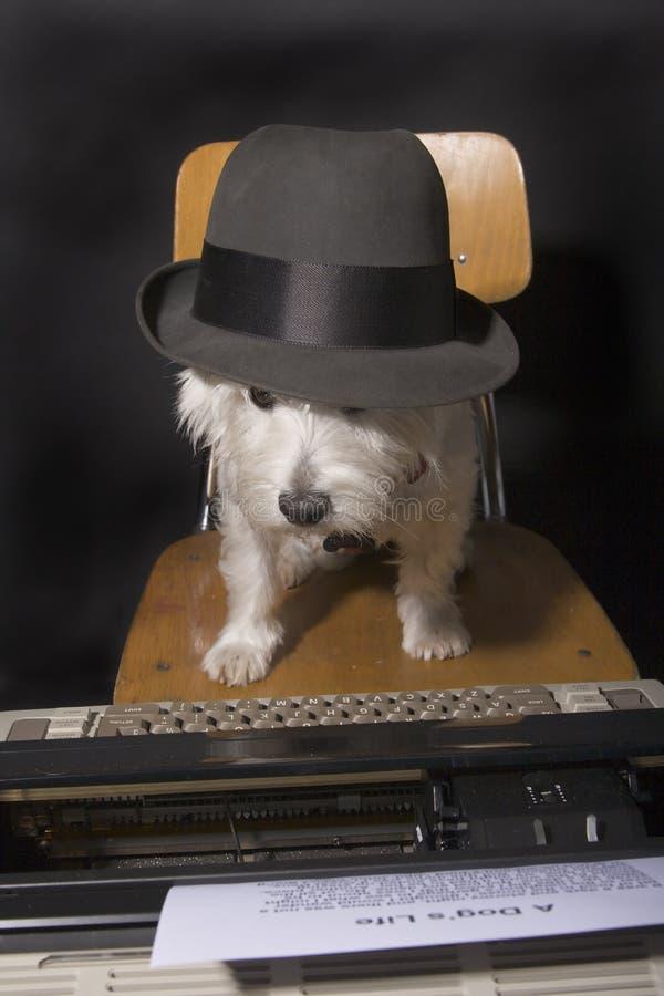 Creazione canina fotografie stock libere da diritti
