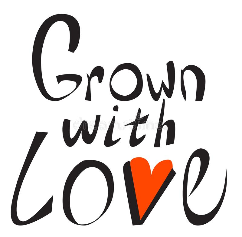Crecido con amor Mano escrita poniendo letras al cartel Concepto de diseño para las etiquetas de la comida del eco, mercados de l stock de ilustración