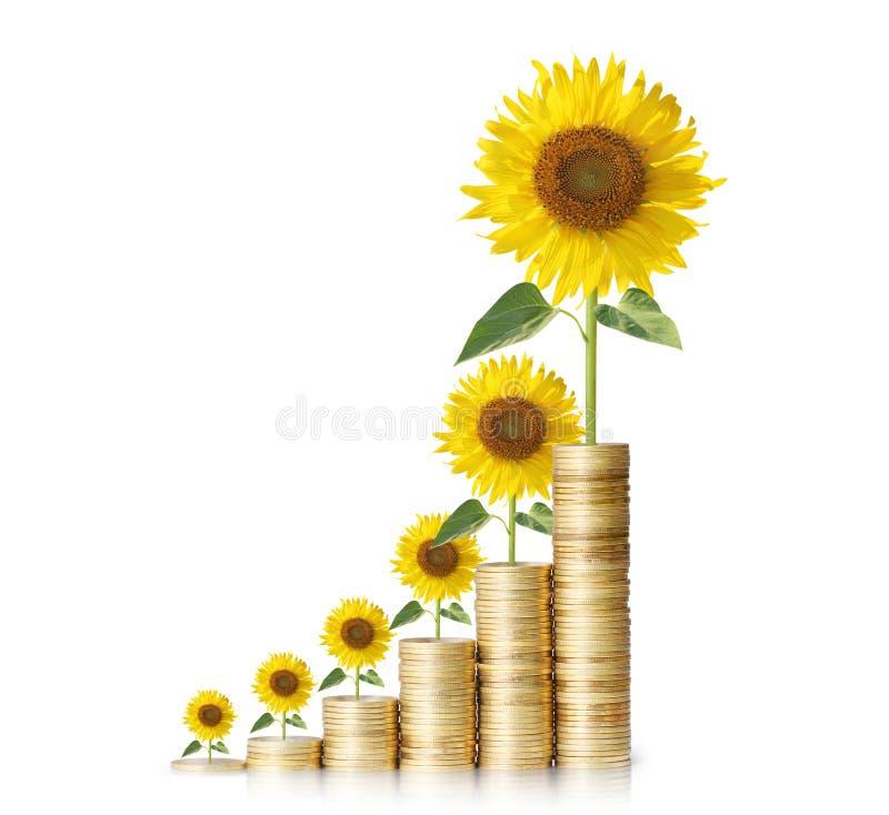 Crecimiento de flor de Sun de monedas imágenes de archivo libres de regalías