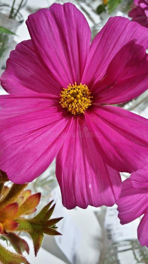 Crecimiento de flor púrpura afuera fotografía de archivo libre de regalías