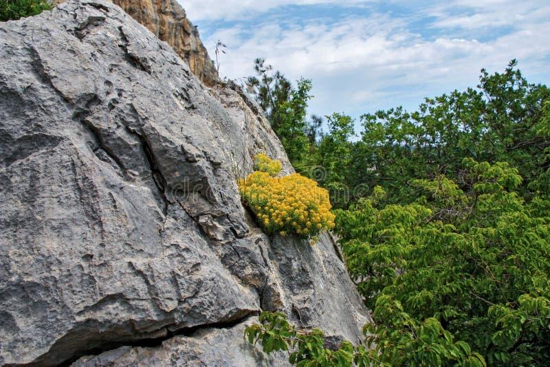 Crecimiento de flores amarillo en la roca foto de archivo