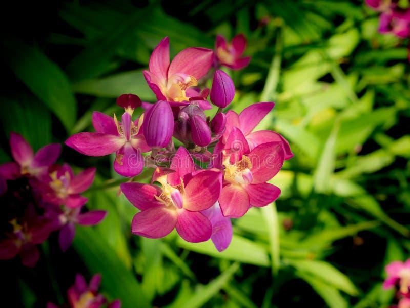 Crecimiento de flores rosado de la orquídea en la tierra imagen de archivo libre de regalías