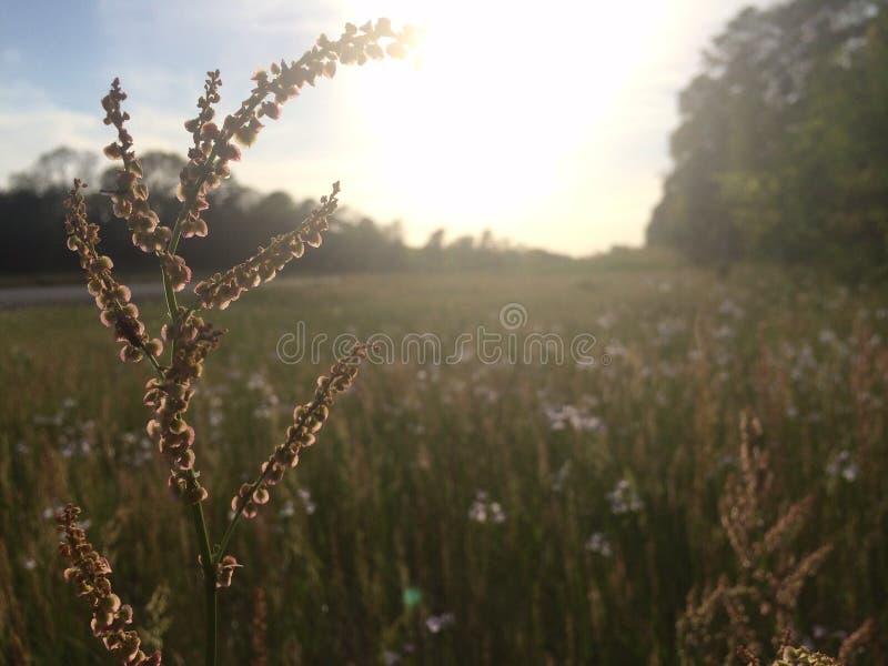 Crecimiento de la primavera imagenes de archivo