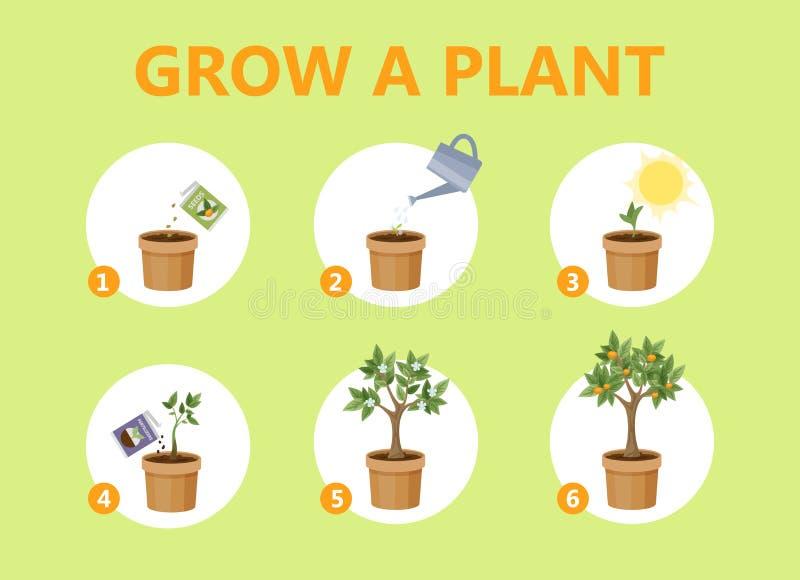 Crecimiento de una planta en la guía del pote ilustración del vector