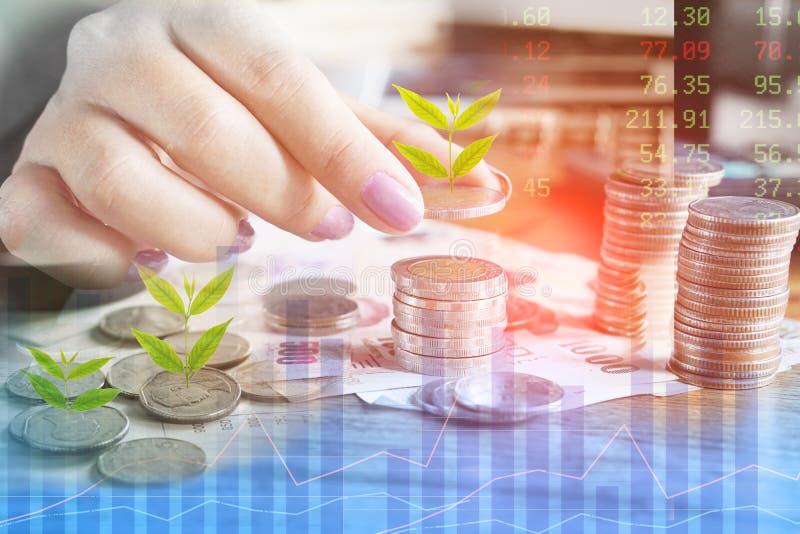 Crecimiento del negocio, inversión, concepto del éxito con la mano de la mujer que cuenta la moneda con el crecimiento del árbol foto de archivo