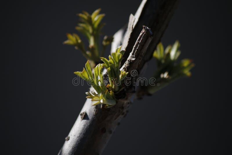 Crecimiento del tiempo de primavera fotografía de archivo