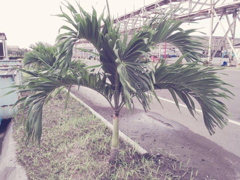 Crecimiento joven de los árboles fotografía de archivo libre de regalías