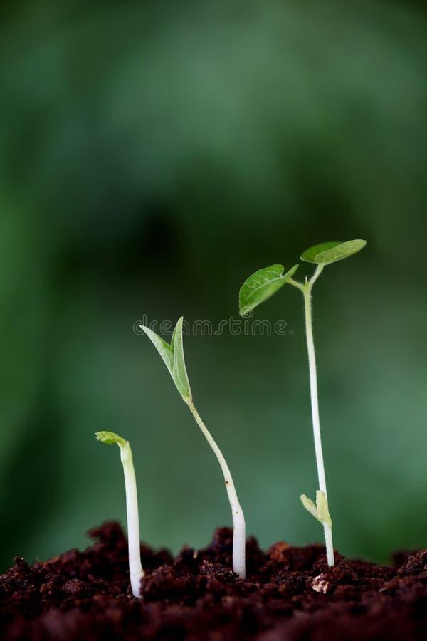 Crecimiento-nuevos principios de la planta imagen de archivo libre de regalías