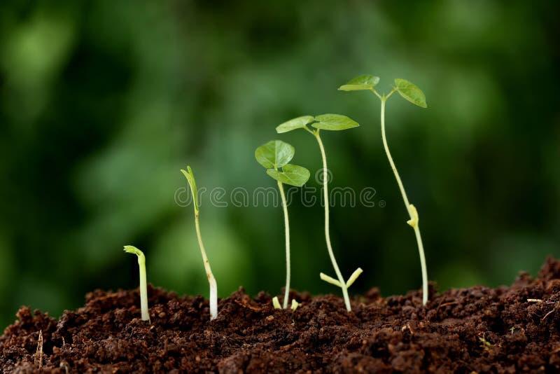 Crecimiento-nuevos principios de la planta imagenes de archivo